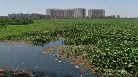 Polluted lake in Bangalore