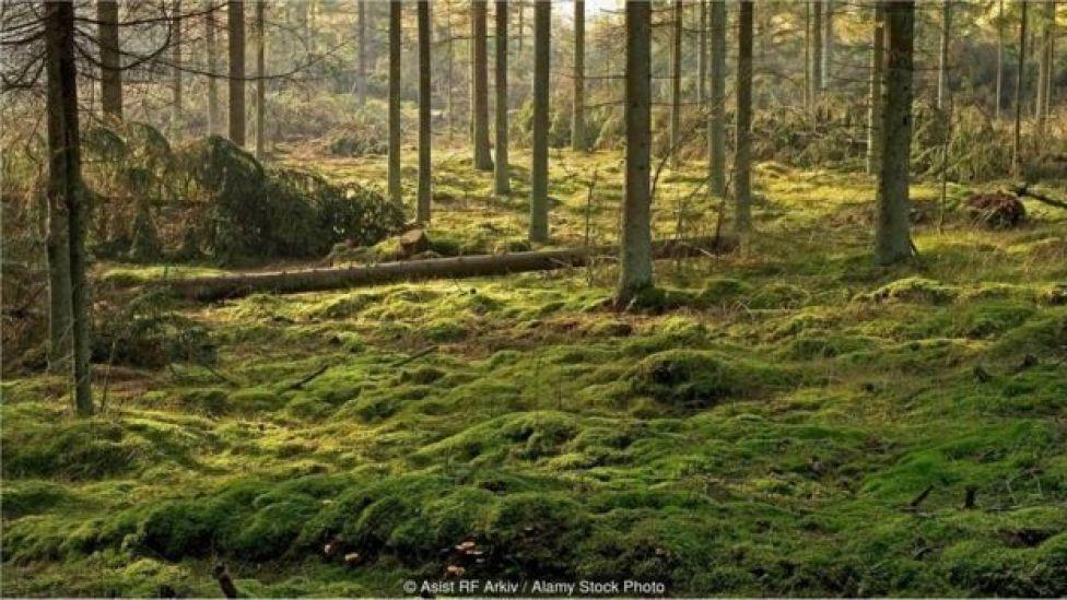 Floresta dinamarquesa