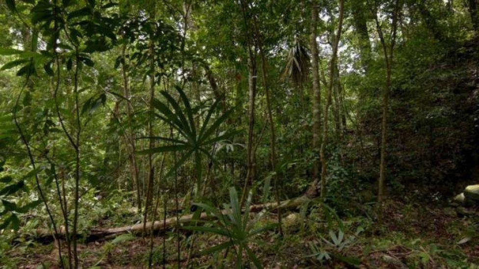 Jungla de Guatemala