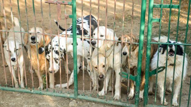 Perros en la granja