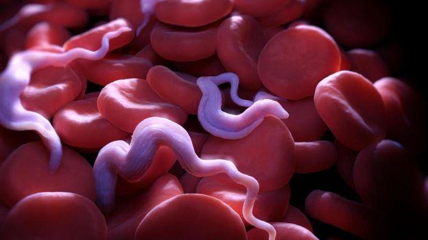 Parasitas em contato com o sangue