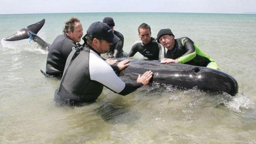 إنقاذ الحيتان