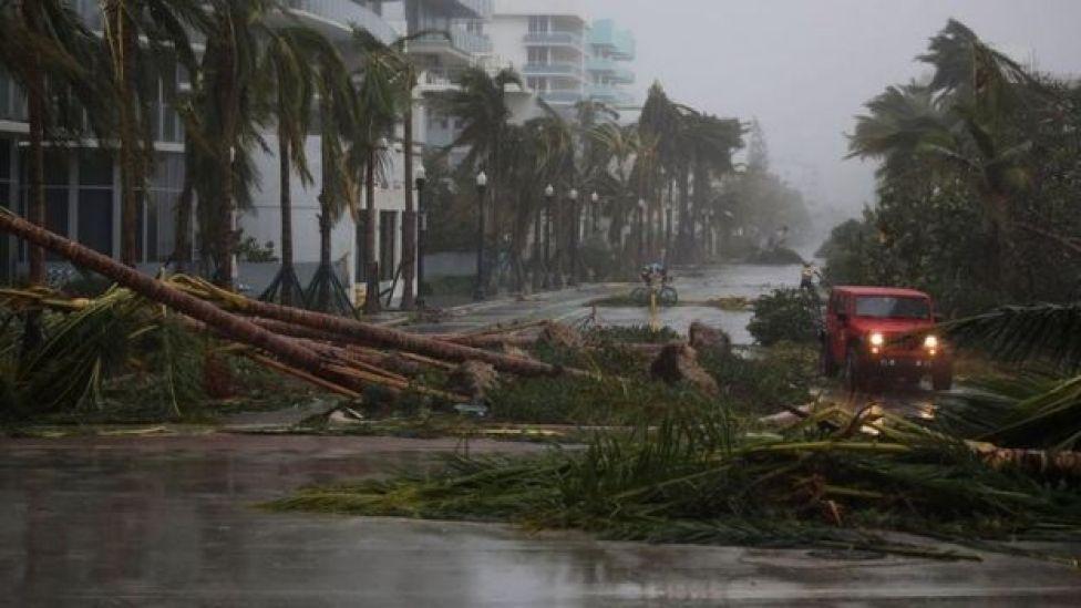 Carro passa por palmeiras derrubadas em Miami