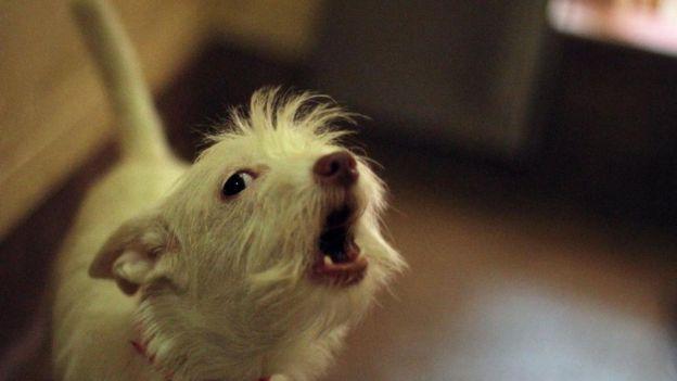 Un perro ladrando