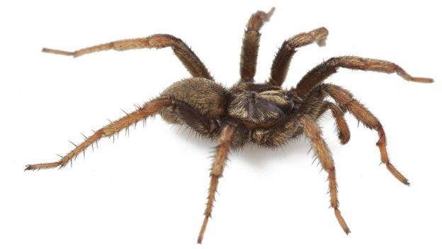 Una araña enorme similar a una tarántula
