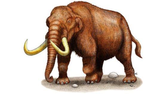 mastodon illustrations