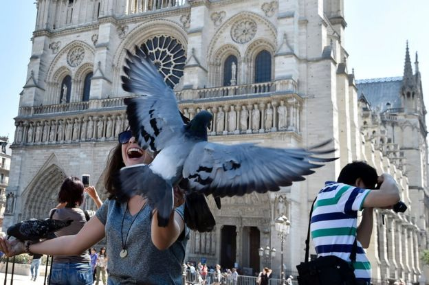 A tourist reacts and plays with pigeons as other tourists takes pictures in front of Notre-Dame Cathedral, Paris, 15 August