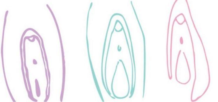 Ilustraciones de vulvas.