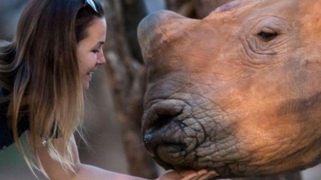 Veterinária com rinoceronte