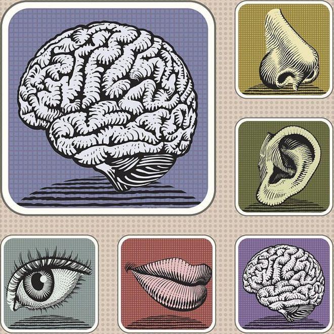 Ilustración de los 5 sentidos