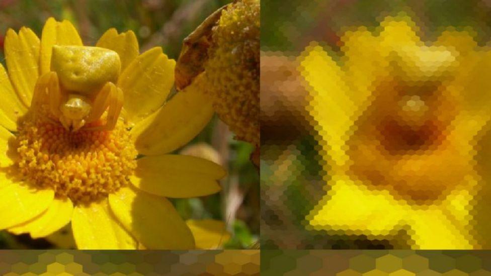 Visión de abeja