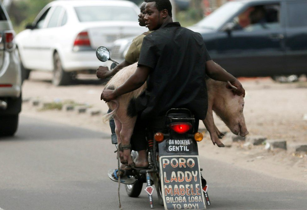 Men transport a pig with a motorbike in Kinshasa, Democratic Republic of Congo - Wednesday 28 September 2016