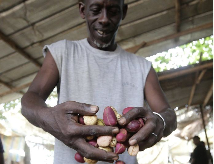 A worker handles kola nuts in Anyama, Ivory Coast - Tuesday 7 February 2017
