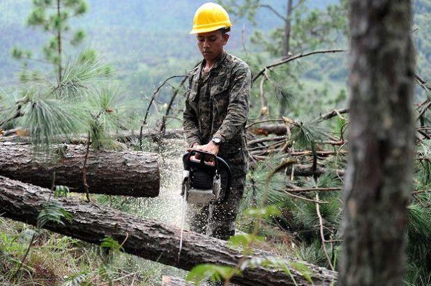 Honduras pierde el 3% de sus bosques