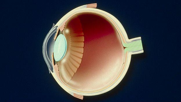 Gráfico de globo ocular