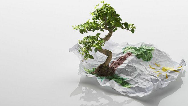 Arból de verdad y de papel