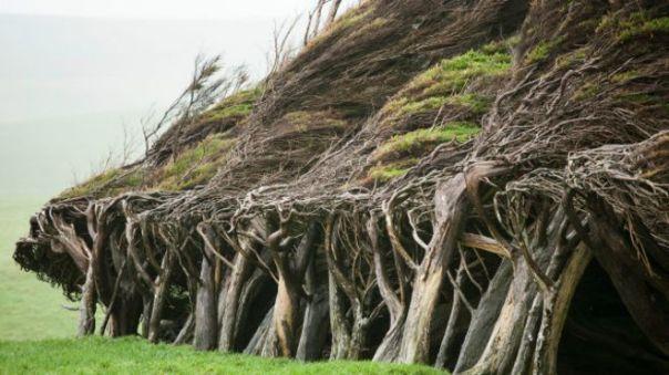 Árboles doblados por efecto del viento