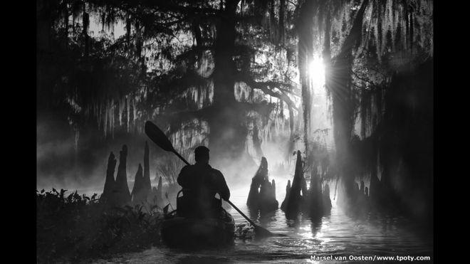 Kayak entre cipreses gigantes