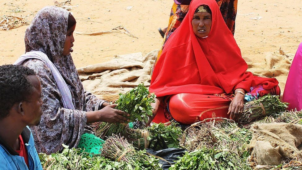 Women sell bundles of the mild stimulant known locally as khat at a market in the Somali capital, Mogadishu on June 18, 2012.