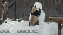 Giant panda v snowman