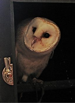 Owl in a box
