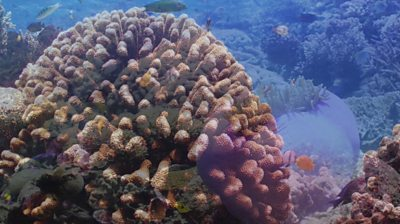 Indonesia coral reef partially restored in extensive project #world #BBC_News