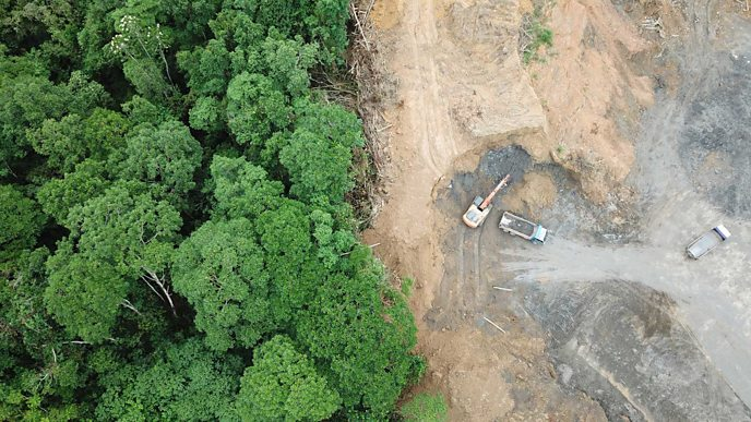 Forest that's being cut down for palm oil