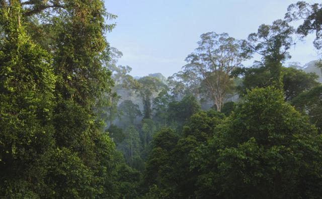 The rainforest of Borneo