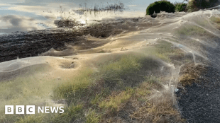 Spider webs blanket Australian landscape after floods #world #BBC_News