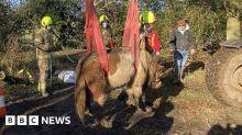 116648069 horse5