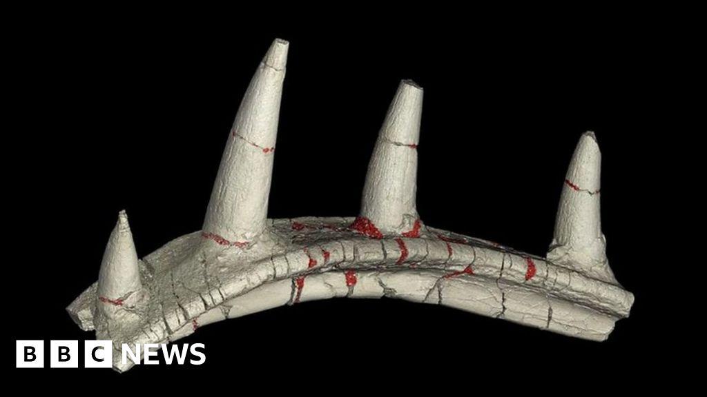 , Strange ankylosaur dinosaur bone excites scientists, The Evepost BBC News