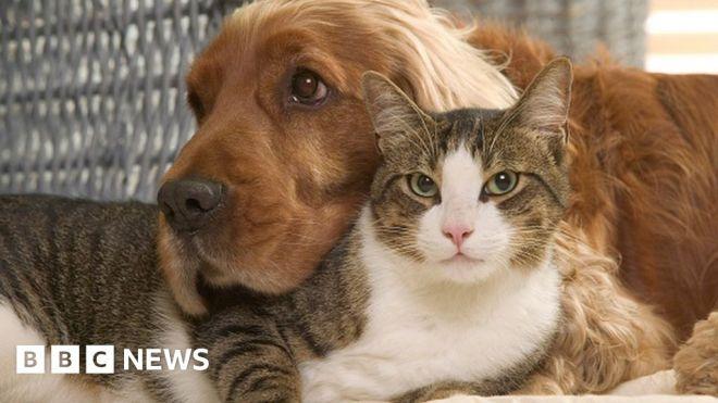 Covid: Will your pet need a coronavirus vaccine? #world #BBC_News
