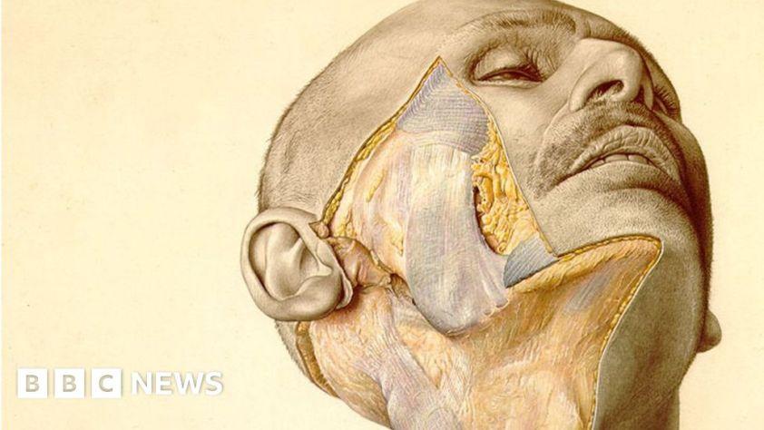 B! BBC Eduard Pernkopf: The Nazi book of anatomy still ...