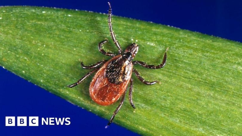 First England case diagnosed of tick-borne babesiosis