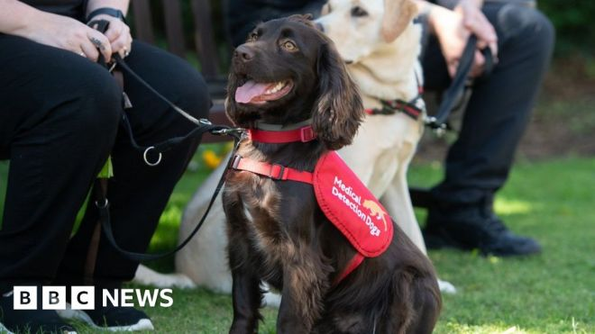 NHS staff sign up to Covid-19 sniffer dog trial