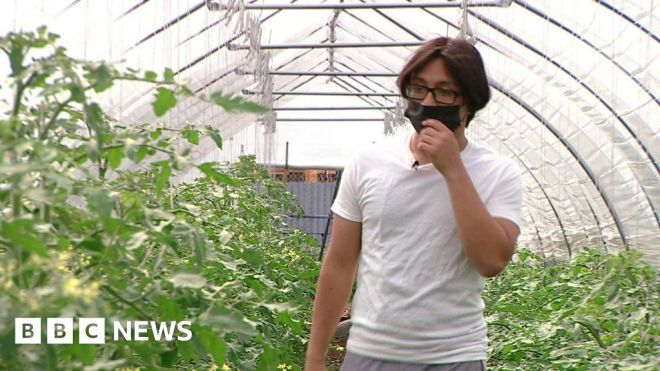 The New York farm helping young people into work #world #BBC_News