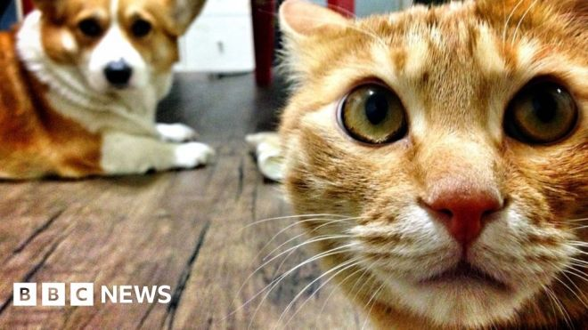 Covid: South Korea launches test for pet cats and dogs #world #BBC_News