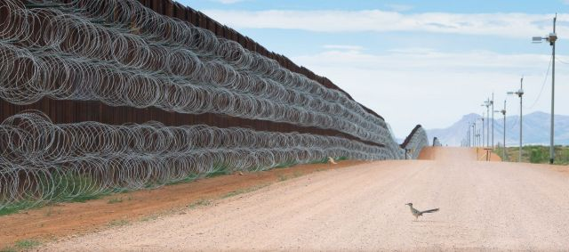 A roadrunner stopped in its tracks by the USA-Mexico border wall