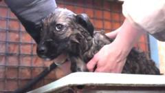 A dog at Chernobyl