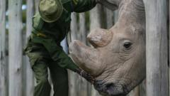 Sudan, the world's last male northern white rhino, died in 2018