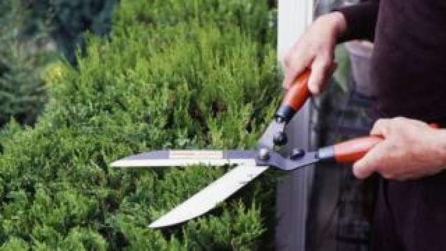 A file photo of garden shears being used to trim a hedge