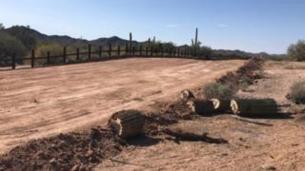 trump Cacti that are over 200 years old and have sacred significance have been chopped down