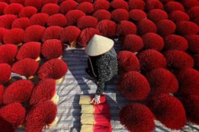 A woman collects dried incense sticks