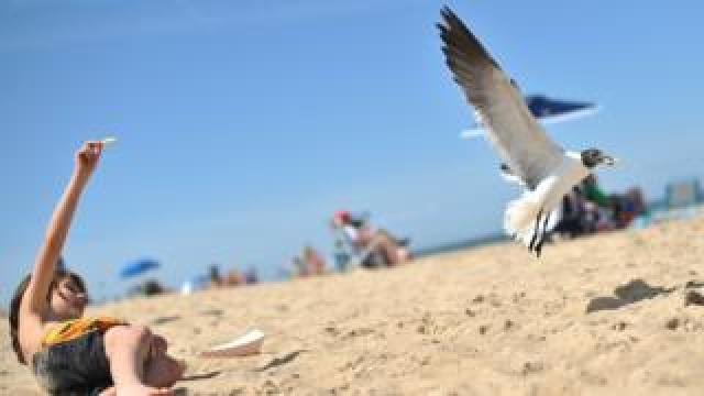 A seagull takes a chip from a boy on a beach