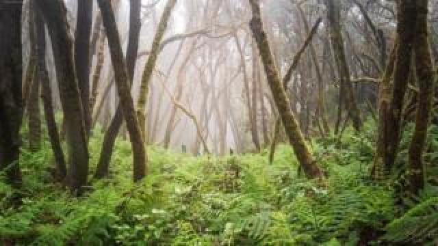 Forests face threats from logging and clearance for agriculture