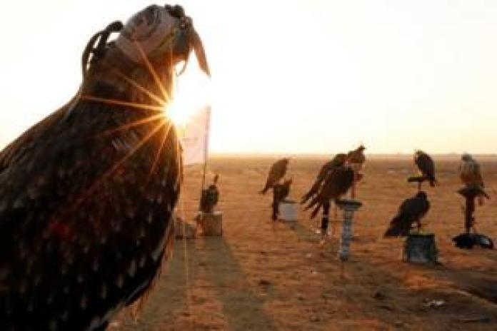 Falconers of Egyptian clubs and austringers are seen during sunrise and celebration on World Falconry Day at Borg al-Arab desert in Alexandria, Egypt, November 17, 2018