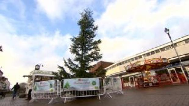 One of Cannock's trees ahead of the switch on