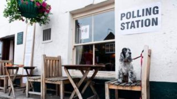 A dog waiting outside a polling station
