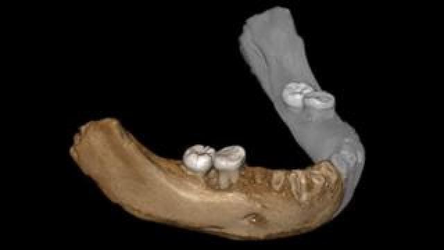 Xiahe mandible