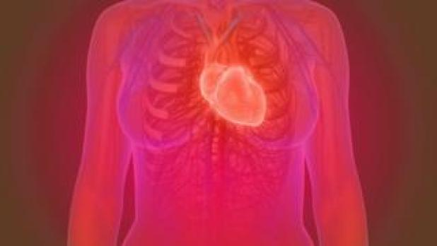 3D illustration of the female human heart anatomy